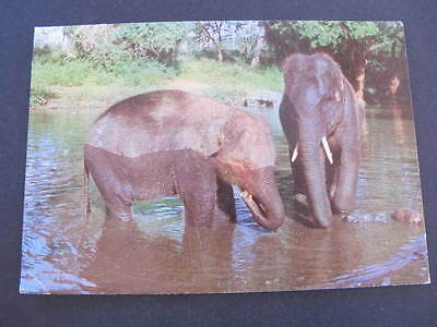 Elephants bathing Postcard