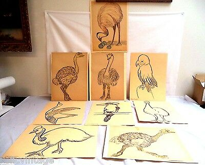 Stunning Vintage Estate Sketched Outlined Or Colored Bird Drawings Lot!!! B105