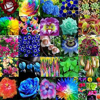 Various Flower Seed Ideal Garden Heirloom Potted Rare Flower Plant Ornamental