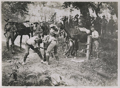 World War One Ww1 Original Photo - At The Trench Mortar School Mules