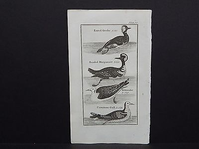 Buffons Natural History 1792 Birds S1#03 Eared Grebe, Hooded Merganser, Gull