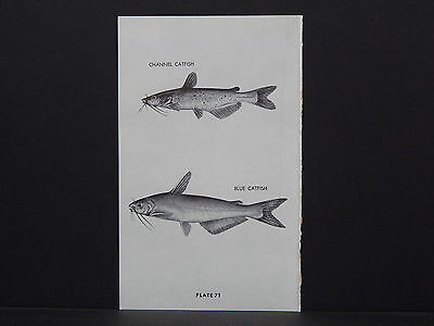 North American Game Fish /& Fishing Flies Poster Reprints On 1920s Paper *P072