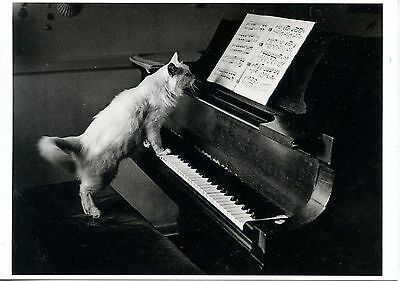 Carte Postale / Postcard / Published By Fitting Image Holland / Cat / Chat Piano