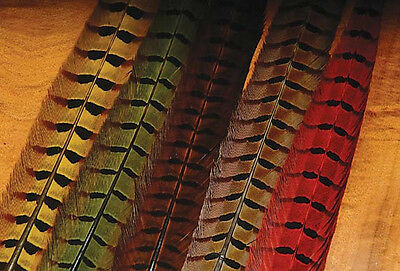 WAPSI DYED PHEASANT TAIL CENTRE FEATHERS - PACKET OF 2 (PTP)***2016 Stocks******