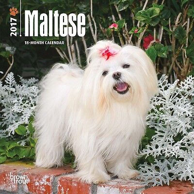 "Maltese 2017 MINI WALL CALENDAR Browntrout Publishers 7"" X 7"""
