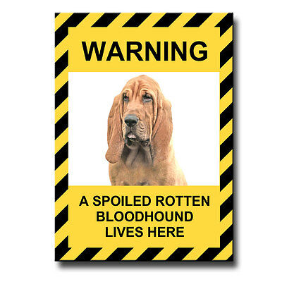 BLOODHOUND Spoiled Rotten FRIDGE MAGNET New DOG