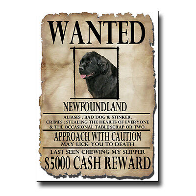NEWFOUNDLAND Wanted Poster FRIDGE MAGNET No 2 Black DOG