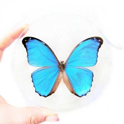 Real Blue Morpho Menelaus Didius Butterfly Christmas Ornament Clear Ball Gift