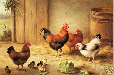"""Handicrafts Art Repro oil painting:""""Rooster&Chickens at canvas"""" 24x36 inch"""