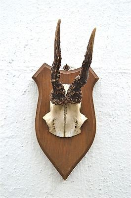 Antique wooden shield with deer skull hunting trophy wall plaque horns 1