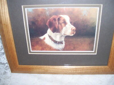 Oak Framed Print of Brittany Spaniel Bird Dog