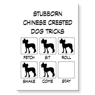 CHINESE CRESTED DOG Stubborn Tricks FRIDGE MAGNET Steel Case Funny