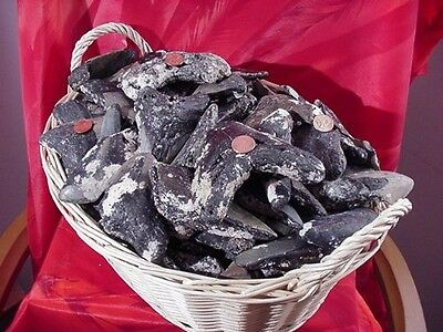 DeepSeaFossils Rare Prehistoric Megalodon Fossilized Shark Tooth Shards & Frags