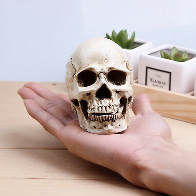 White Small Human Skull Replica Resin Model Medical Realistic 11x7x8.5cm