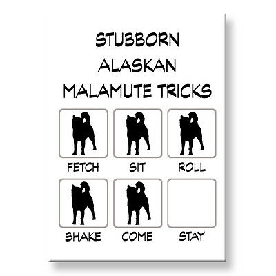 ALASKAN MALAMUTE Stubborn Tricks FRIDGE MAGNET Steel Case Funny
