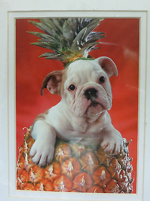 Pineapple Tropical American Bulldog Puppy Dog Matted Picture Print New 8 x 10