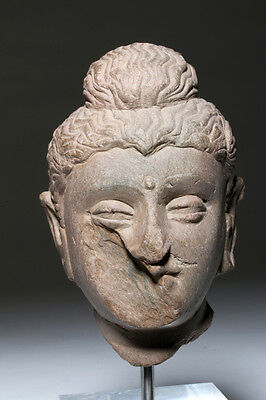 ARTEMIS GALLERY Gandharan Head Fragment of Buddha