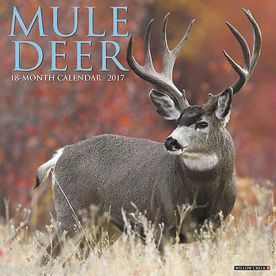 2017 Mule Deer Hunt Hunting Hunter  18 Month Large 12x24 Color Wall Calendar New