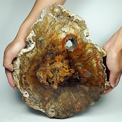 "12.63"" 3212g POLISHED PETRIFIED WOOD FOSSIL AGATE SLICE DISPLAY Madagascar A800"