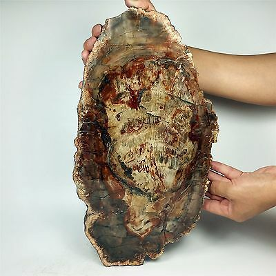 "14.09"" 2628g POLISHED PETRIFIED WOOD FOSSIL AGATE SLICE DISPLAY Madagascar A813"