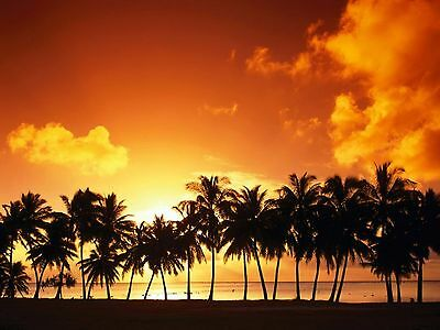 Palm Tree Grove At Sunset  Computer Mouse Pad  9 X 7