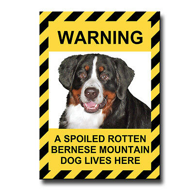 BERNESE MOUNTAIN DOG Spoiled Rotten FRIDGE MAGNET Berner