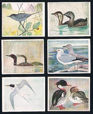 1924 ITC C2 Birds of Canada Tobacco Cards Complete Set of 100