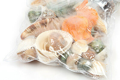 Natural Craft Sea Shells Wedding Table Seashells Decoration Aquarium Mixed bag