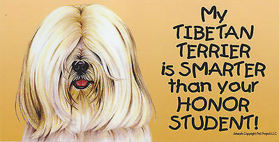 My TIBETAN TERRIER (white) is SMARTER than your HONOR STUDENT car MAGNET 4X8