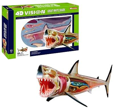 Visible GREAT WHITE SHARK Fish 4D Vision Anatomy 3D Puzzle Model Biology science