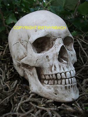 New Design Rubber Latex Mould Moulds Mold Highly Detailed Large Human Skull