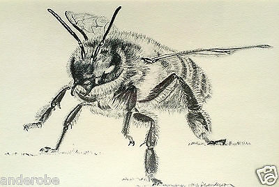 GUARD BEE LITHOGRAPH-Honeybee/BEES Only 400 Produced/Signed & Numbered NICE L@@K