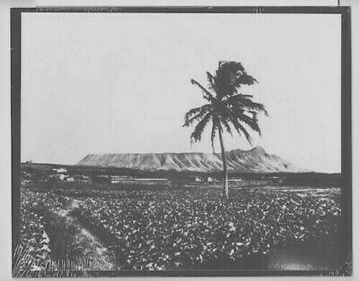"1880's EARLY HONOLULU & DIAMOND HEAD, HAND PRINTED SILVER HALIDE ON 8x10"" MATT"