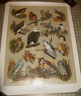 """HAWKS And OWLS 19"""" x 25"""" POSTER - John W. Taylor Art MD Natural Resources"""