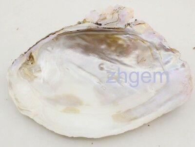 1pcs 150mm-170mm natural huge baroque mother of pearl shell pearl clam display