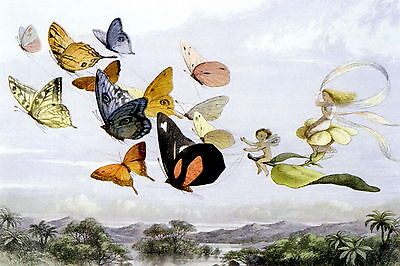 Doyle Print Enchanted Fairy World Flying Fairy Queen Butterfly Carriage Elf