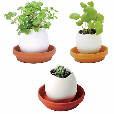 New Crack & Grow Unique Eggling Home Decoration – Perfect for Kids