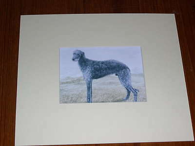 Rare Antique Scottish Deerhound Colour Dog Print By Hodrien