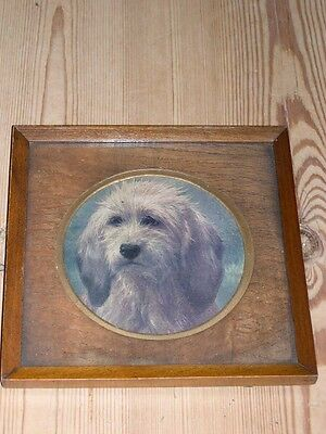 Antique Bedlington Terrier Dog Print In Original Frame Mat & Backing 1935