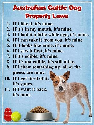 AUSTRALIAN CATTLE DOG Property Laws Magnet PERSONALIZED With Dog's Name 2