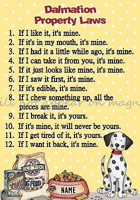 DALMATION Property Laws Magnet Personalized With Dog's Name