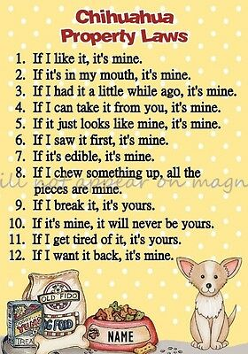 CHIHUAHUA Property Laws Magnet Personalized With Dog's Name