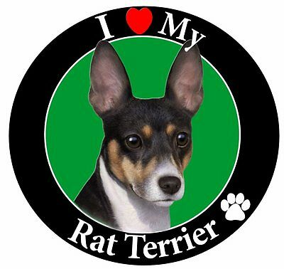 Rat Terrier Car Magnet