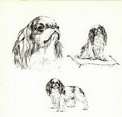 Old Vintage CAVALIER KING CHARLES SPANIEL Dog Art Print Matted Gift 10x8