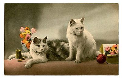 vintage cat postcard beautiful pair white & grey cats w books flowers ball wool