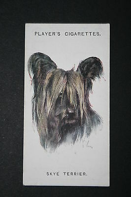 Skye Terrier     Vintage 1920's Dog Portrait Card  # VGC