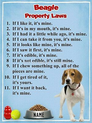 BEAGLE Property Laws Magnet Personalized with Your Dog's Name