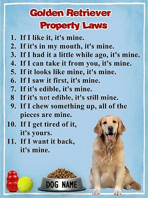 GOLDEN RETRIEVER Property Laws Magnet Personalized with Dog's Name