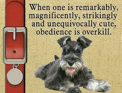 MINIATURE SCHNAUZER Dog Magnet Obedience Is Overkill PERSONALIZED ON TAG