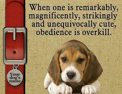 BEAGLE Dog Magnet Obedience is Overkill  Add YOUR Dog's Name